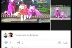 Розовые собаки 3