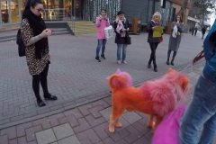 оранжевая собака