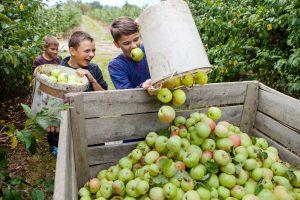 дети и урожай яблок